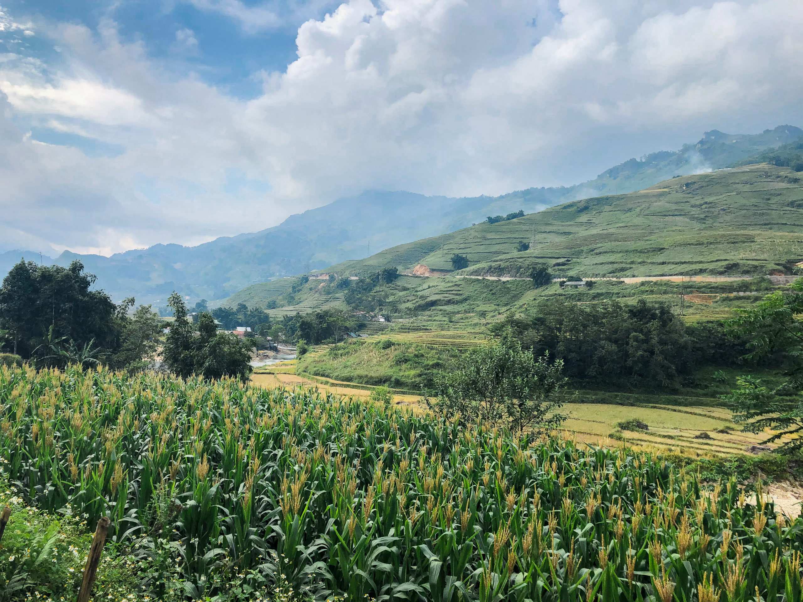 beautiful landscape of terraced field and stream