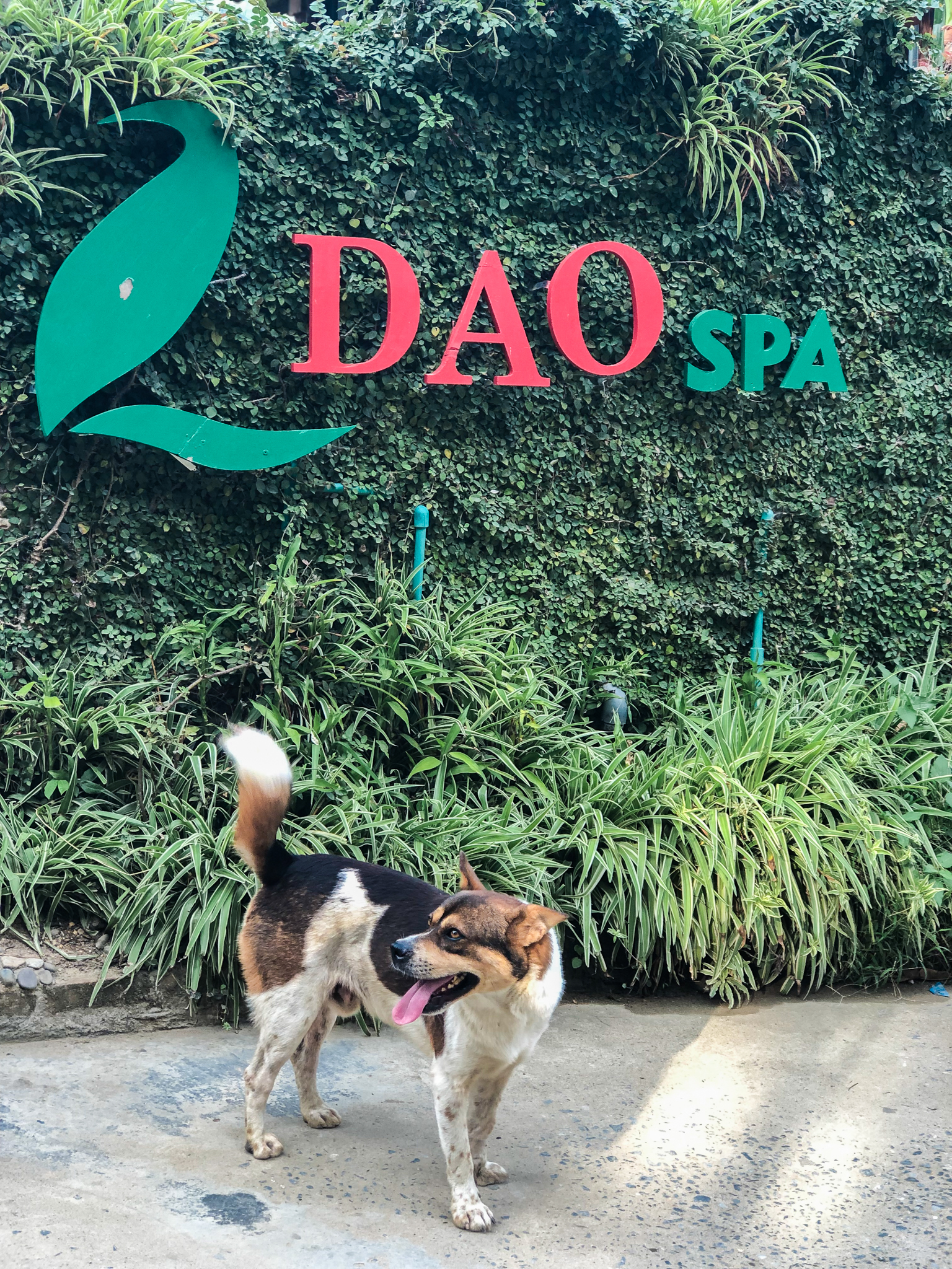 the home dog of Dao Spa and coffee